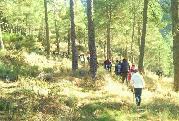 paseos-por-el-bosque